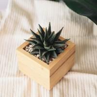 Pot Kayu Kaktus Sukulent   Wooden Pot Succulent Cactus Single 12cm