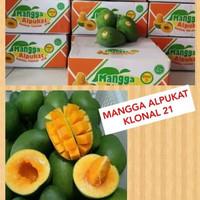 Mangga Alpukat Super/ Klonal 21 MP/ Matang Masak Pohon Asli Pasuruhan - Masak Pohon B