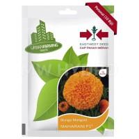 Benih Bunga Marigold MAHARANI F1 - Panah Merah / East West Seed