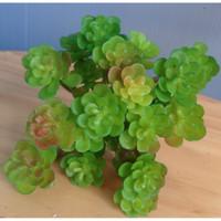 Kaktus Mini Sukulen Plastik Artificial Succulent Hiasan Seserahan Foto