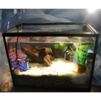 Set Aquarium Medium Size Lengkap Dengan Filter Murah Free Ikan Hias