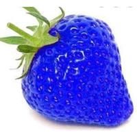 Benih strawberry jumbo 100+ biji