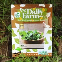 Benih COMMON MINT / Biji Daun Herbal DAILY FARM Tanaman Daun Sayuran