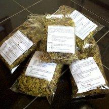 Jual Rumput Kebar Papua Terapi Kesuburan - Kab. Sleman