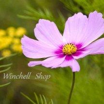 Logo Winchell Shop