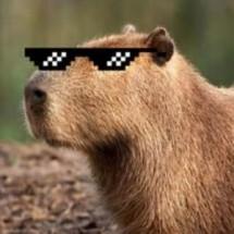 Logo Capybara Bere