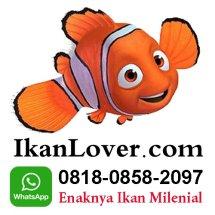 Ikanlover Logo