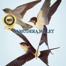 Samudera Walet Logo