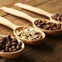 Logo Fresh Coffee Nusantara