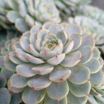 Logo tanaman hias kaktus
