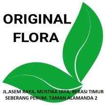 ORIGINAL FLORA Logo