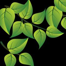 Logo GREEN VENDOR
