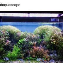 Light Aquascape Karawaci Kota Tangerang Tokopedia