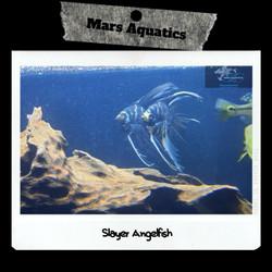Jual Manfish Slayer Murah Harga Terbaru 2020 Tokopedia