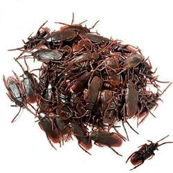 mainan mengenal binatang bentuk kecoa fake cockroach lucu