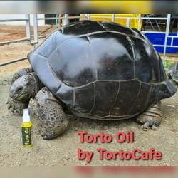 Torto Oil dgn formula dr Amerika khusus kura2 darat. Isi: 100 ml.