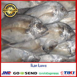 Jual Ikan Kuwe Murah Harga Terbaru 2021
