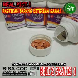 Bio Lingzhi Asli Herbal Original Obat Kesehatan Ginjal Dan Hati