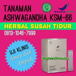 Herbal Susah Tidur Bio SC MILD Ashwagandha terlaris