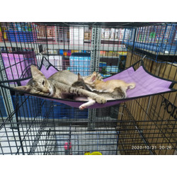 Ayunan kucing / hammock kucing