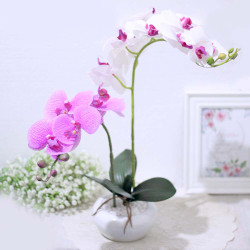 bunga artificial plastik hias anggrek PREMIUM LATEX + pot keramik B8