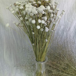 bunga kering / dried flower button