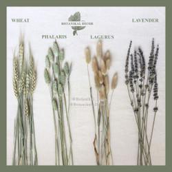 Dried Flower IMPORT phalaris lavender lagurus wheat gandum bunga asli