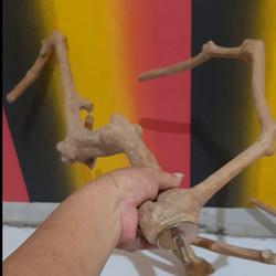 TANGKRINGAN IGUANA TANGKRINGAN BURUNG Love bird KAYU TANGKRINGAN 50 cm