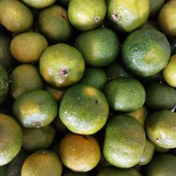 buah jeruk santang madu hijau segar
