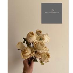 Dried Rustic Baby Rose in White// Bunga Mawar Kering Putih