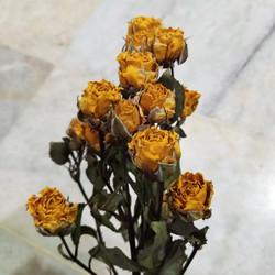 Baby rose fresh flower / baby rose dried flower