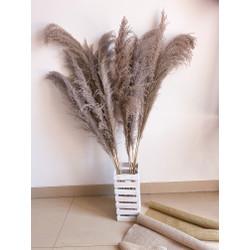 Human Size Fluffly Feathery Brownie Pampass Greyish Properti Foto