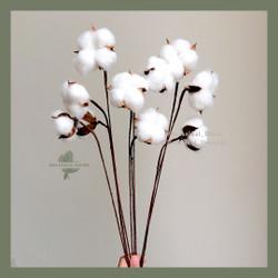 Artificial Cotton Flower White Single Head Bunga Kapas Palsu Putih