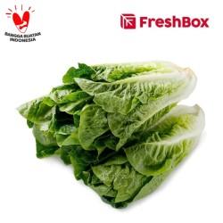 Romaine Lettuce 500 gr FreshBox
