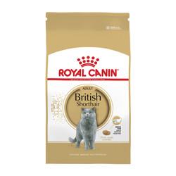 Jual Kucing British Short Hair Murah Harga Terbaru 2020