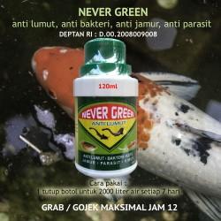 NEVER GREEN Anti Lumut Kolam Tambak Ikan Kurangi Bau