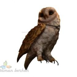 Jual Burung Hantu Barn Owl Murah Harga Terbaru 2020