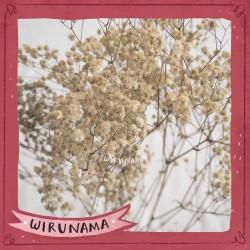BUNGA KERING BABY BREATH RUSTIC DRIED FLOWER UNTUK DEKORASI RUMAH