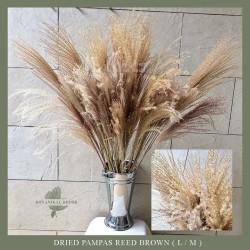 Dried Pampass Reed Grass Brown Pampas Kering Coklat Natural Decor