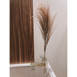 Bunga Kering Pampas Coklat Dried Flower Rustik Dekorasi Vintage Murah