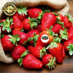 STRAWBERRY / STRAWBERY FRESH PREMIUM