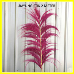 dried flower / Daun Rayung Stick 170 cm Murah