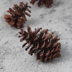 Pine Cone / Buah Pinus Kering / Biji Pinus / Properti Foto