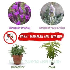 Paket 4 Tanaman Anti Nyamuk