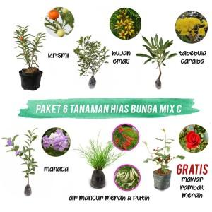 Paket 6 Tanaman Hias Bunga Mix C