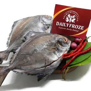 Harga ikan bawal hitam 1 kg bersih sisik dan | HARGALOKA.COM