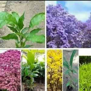 Info Gbng 06 Aplikasi Bunga Korea Putik Dahlia Mix Warna Per Lusin Katalog.or.id