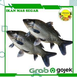Harga ikan mas segar gratis potong 500 gram ikan segar | HARGALOKA.COM
