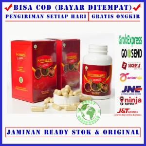 Harga sarmucare sarang semut asli papua   obat gula darah tinggi diabetes   100   HARGALOKA.COM