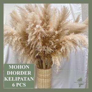 Harga dried flower medium jumbo creamy pampas bulu bunga kering asli | HARGALOKA.COM